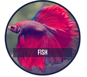 Animalerie, animalerie Bedford, Pet Shop, fish accessories, fish, fish tank, fish food